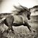wildhorsegirl