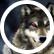 wolfgirl1123