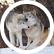 xXWild_WolfXx