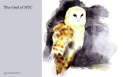 The Owl of NYC