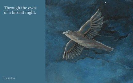 Through the eyes of a bird at night.