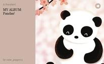 MY ALBUM: Pandas!