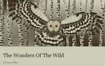 The Wonders Of The Wild