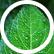 leaf_writer