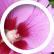 pinkpassionflower