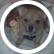 rydog2004